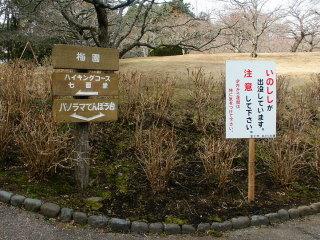 Iwamoto_cyui01