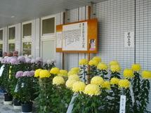 Shinfuji_kikka02