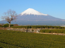 Fuji20081227