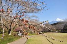 Iwamoto20090321_01