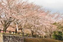 Sakura20090328_01