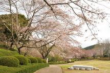 Sakura20090328_03