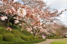 Sakura20090328_04