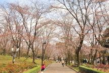 Sakura20090328_05