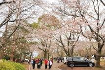 Sakura20090328_06