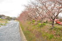 Sakura20090328_09