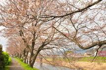 Sakura20090328_10