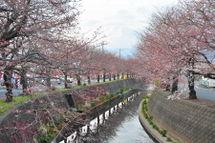Sakura20090328_12