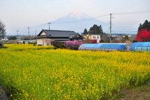 Gebazakura03