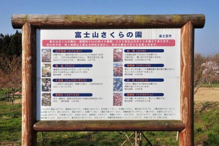 Sakurasono04