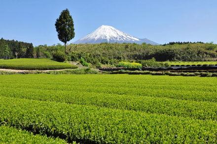 Fuji20090422_01