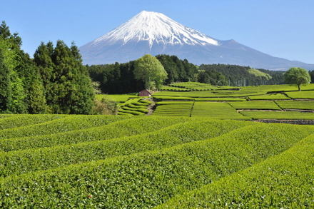 Fuji20090422_02