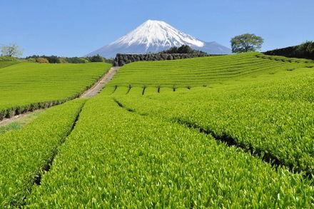 Fuji20090422_03