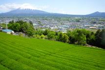 Takahara01