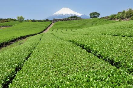 Fuji20090509_02