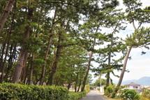 Shirasukaido01g