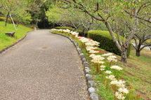 Iwamoto_higan02