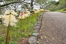 Iwamoto_higan03