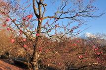 Iwamoto_hatsuhi10