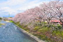 Sakura20100327a