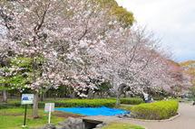Sakura20100327d
