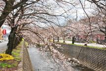 Sakura20100327j