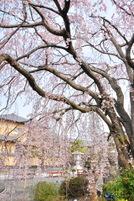 Honmyoji2010b