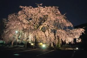 Honmyoji2010e