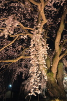 Honmyoji2010g