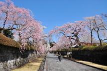 Taisekiji_shidare02