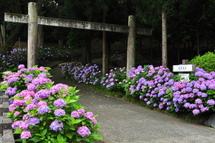 Iwamoto20100626g