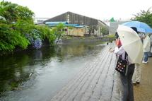 Fujipaku201006l