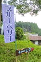 Chanoki201007a