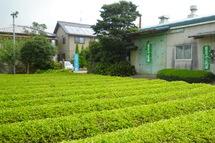 Fujipaku201008a