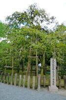 Chokkura_mishima02g