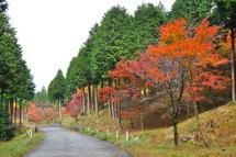 Hinoki_kouyou02
