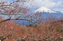Iwamoto20110101b