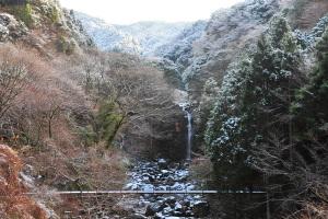 Snow20110110c