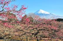 Iwamoto20110213a