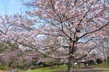 Iwamoto20100327