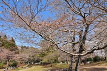 Iwamoto20110326