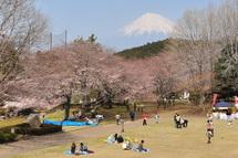 Sakura20110402a