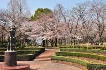 Sakura20110402f