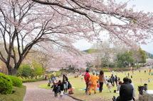 Sakura20110410c