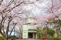 Sakura20110410g