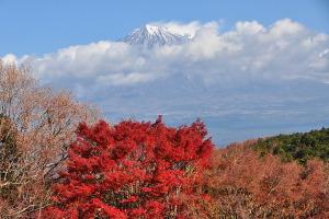 Iwamoto20111224a