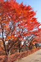 Iwamoto20111224b