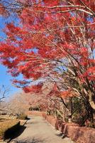 Iwamoto20111224c