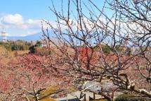 Iwamoto20111224f