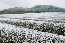 Snow20120117c